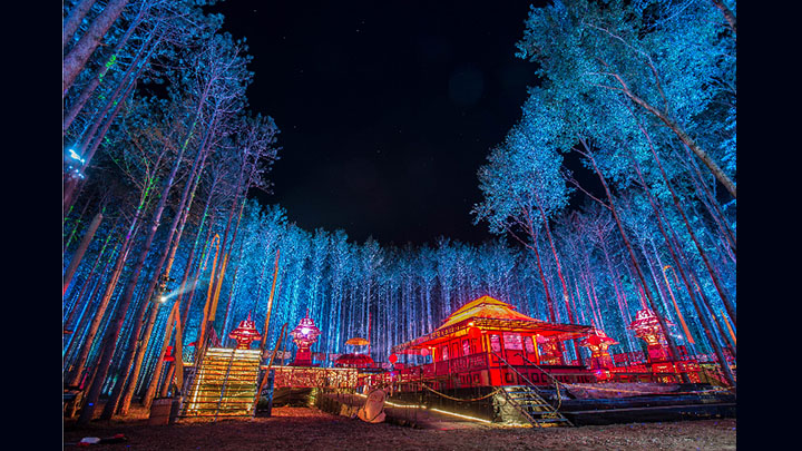 Night-time in the forest before opening